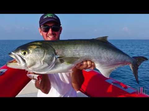 Bluefish top water fishing molix for Top water fishing